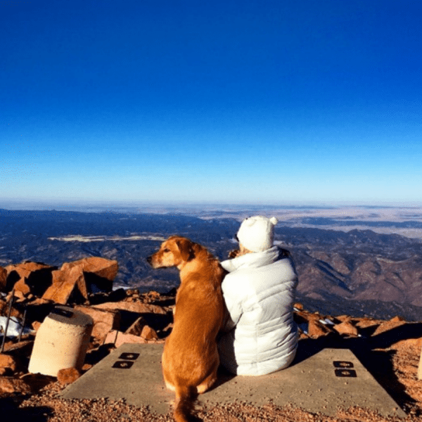 Travel Nurse Pets on Assignment